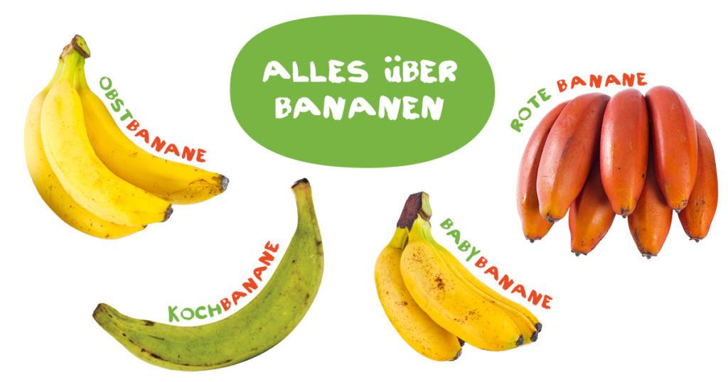 Alles über Bananen